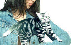 Flat Cat, para los que no se animan a tener una mascota en casa