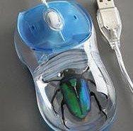 Mouse con insecto incorporado