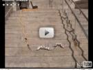 Serpientes robóticas que dan miedo